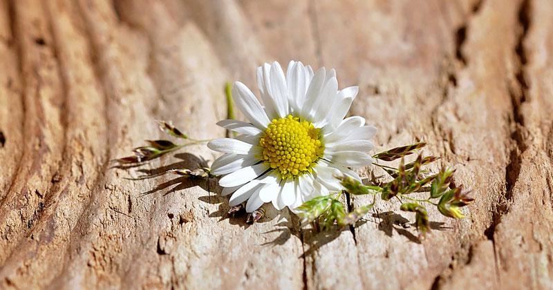inspiring white flower